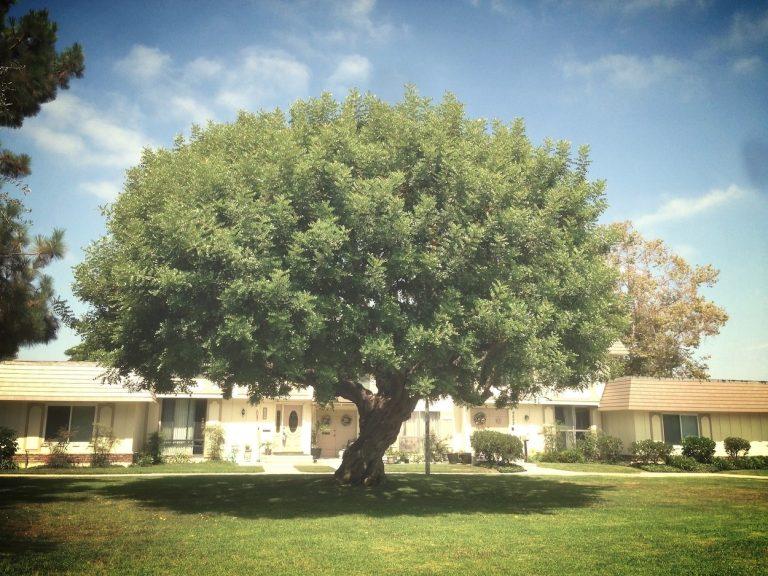 Tanglewood North, Cypress CA